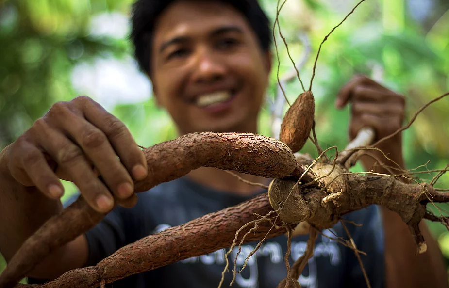 Native Cassave Root